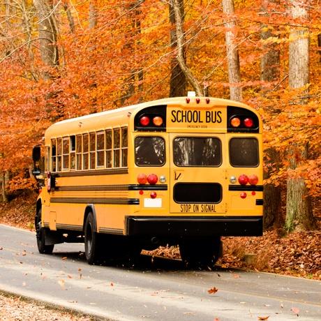 Transportation School Bus Woods